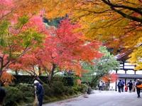 Kyoto112304_1