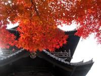 Kyoto112305_1