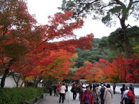 Kyoto112306_1
