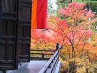 Kyoto112307_1