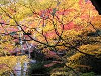 Kyoto112308_1
