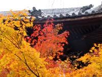 Kyoto112310_1