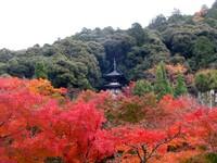 Kyoto112312_1