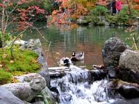 Kyoto112313_1