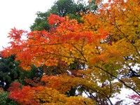 Kyoto112314_1