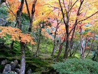 Kyoto112318_1