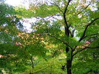 Kyoto112320_1